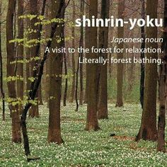 [Wk 6 Topic: Forest Bathing]  shinrin-yoku: Japanese noun A visit to the forest for relaxation. Literally: Forest bathing.