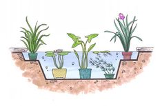 """HowStuffWorks """"Planting a Water Garden"""""""