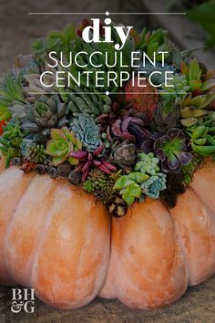 This fall pumpkin succulent centerpiece is perfect for a fall get together, or even a Thanksgiving table. #succulentpumpkin #fallcenterpiece #pumpkindecor #fallcraftideas #bhg