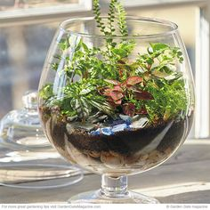 Terrarium how-to | Garden Gate eNotes