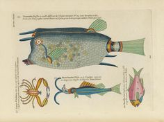 Poissons, Ecrevisses et Crabes can lay claim to be being the earliest known publication in colour on fish, though many specimens seem to border on fantasy.
