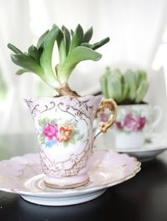 Succulent Teacup Garden. Now I know what to do with all those damn souvenir/keepsake coffee mugs I don't use and won't toss.