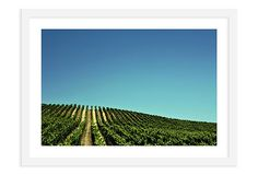 Kevin Russ, California Vineyard $189-299 on OneKingsLane.com