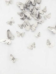 pattern of flight / butterflies / black and white / soft background or texture