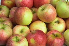 Hur du förvarar äppelskörden | Blomsterlandet.se