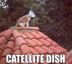 Catellite Dish,  Click the link to view today's funniest pictures!
