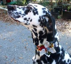 Dog CollarRetro RocketMade to Order in Your by BowWowCouture, $19.95