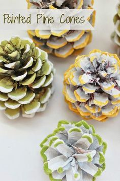 Did you know there are both male and female pine cones? Apparently the male cones are smaller and only live a few...