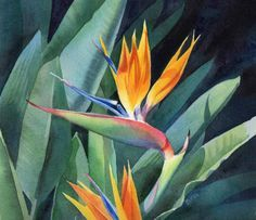 Barbara Fox is a painter recognized for watercolor and oil mediums; Watercolor Fox, Watercolor Flowers, Watercolor Paintings, Flower Paintings, Watercolours, Birds Of Paradise Flower, Fox Art, Tropical Art, Arte Floral
