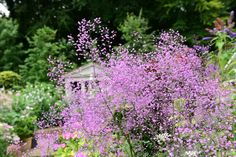 Color this beautiful summer day  Pink!