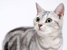 OMC!!!Very beautiful cat!