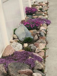 Side yard Rock garden with Creeping thyme, early blue violets, fire witch, pussy toes, and succulents. Early blue violets are great for growing in rock crevices. Landscaping With Rocks, Front Yard Landscaping, Landscaping Tips, Landscaping Software, Country Landscaping, Inexpensive Landscaping, Luxury Landscaping, Side Yard Landscaping, Front Walkway