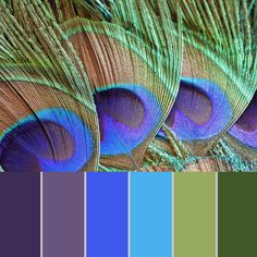 Glitter Paper Pack of Peacock Feathers,Colors of Life, Glitter Digital Papers suitable for scrapboo Peacock Color Scheme, Color Schemes Colour Palettes, Paint Color Schemes, Peacock Colors, Colour Pallette, Color Palate, Color Combos, Peacock Feathers, Best Color Combinations
