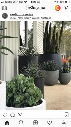 Balcony planters Balcony garden Plants Outdoor pots Garden Potted plants outdoor If its pot plants that make you happy pot up as many as you can Balcony Planters, Balcony Garden, Garden Pots, Potted Garden, Potted Plants Patio, Pots For Plants, Plants For Balcony, Cactus Garden Ideas, Small Gardens