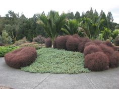 Nikau palms in an island of coprosma 'Red Rocks' and other groundcover Landscape Design, Garden Design, Home Landscaping, Rustic Gardens, Outdoor Living, Outdoor Decor, Small Gardens, Native Plants, The Great Outdoors