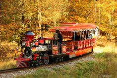 Wir nehmen euch mit auf eine Reise... Wild- und Freizeitpark Allensbach, Bodensee, Herbst, Zug, Natur, Sonne