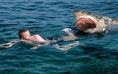 Shark attack Swimmer - Great White Shark.  This picture..........