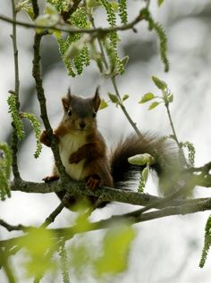 .squirrel in the tree.