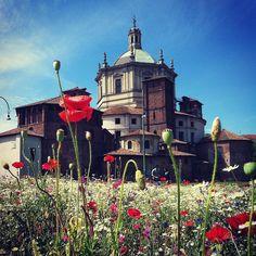 Angoli di campagna in città.  #milano #piazzavetra #parcodellebasiliche #primavera #primavera2016 #flowers #streetphoto #streetphotography #fotografimilanesi #igersmilano #ig_milano #cittadimilano #milanoinsight #milanodavedere #picoftheday by matinyc