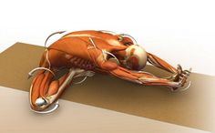 Understanding body mechanics helps deepen your practice. Open up at a #WanderlustFestival this summer.