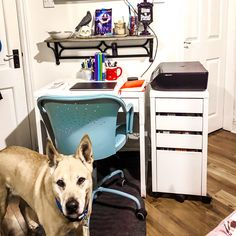 I organized my writing space and filled it with things to inspire me - like skills and ravens. . . #niamh looks a little worried about the changes but I think that overall she approves. . . #mondaymatters #jckeoughauthor #paranormalauthor #dogsofinstagram #writingspace #thelaramieharperchronicles #skullsandravens
