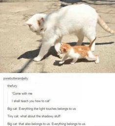I will teach you how to cat
