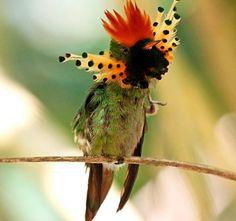 Resultado de imagen para bird of paradise animal