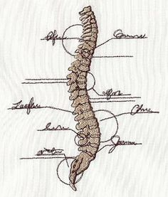 Anatomical Spine Give your embroidery some backbone! Stitch this design for chiropractors, other health care professionals, or anyone who just thinks bones look cool.