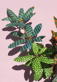 Plantas tropicais com releitura pop art de Sarah Illenberger stylo urbano-1