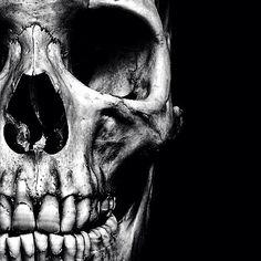 Skull Head Art Memento Mori Reference Human