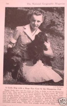 "From 1941,  National Geographic magazine. Under the photo it says: ""A Little Dog with a Huge Fur Coat Is the Hungarian Puli. Shaggy Zsoka (left) & pups ... are pictured with the daughter of Zsoka's owner, Mr. Louis Kiss of New York City. In its native Hungary the Puli herds sheep, sometimes actually leaping upon their backs. Recently the United States Department of Agriculture has experimented with Pulis at Beltsville, Maryland, in tests of inheritance of intelligence and temperament."""