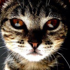 Amber eyes....