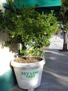 Mexican Key Lime Tree Information: Tips For Growing Key Limes