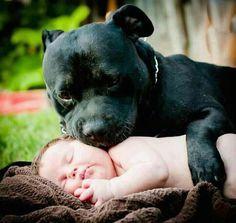 Amorosos perros protegiendo a sus bebés humanos