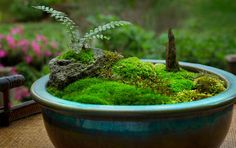 moss bowl - Google Search