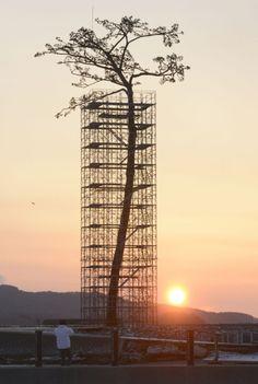 Vuelven escultura al único árbol que sobrevivió al tsunami en Japón