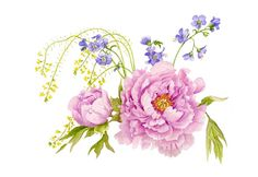 peony picture - Google Search