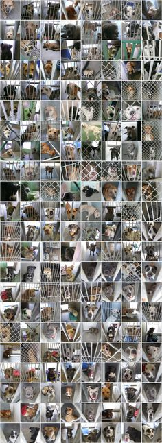 Just a small sample of the photos taken of dogs euthanized because people refuse to spay and neuter and there are not enough adoptive homes