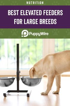 Looking for an elevated dog feeder for large breeds? Read our buyer's guide and see our top 5 dog bowl picks along with reviews. Elevated Dog Feeder, Elevated Dog Bowls, Large Dog Breeds, Large Dogs, Dog Food Bowls, Dog Eating, Dog Food Recipes, Your Dog, Nutrition
