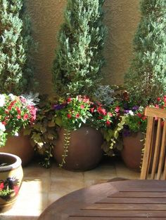 Tuscan patio garden - potted plants