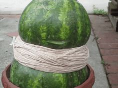 Explode a watermelon in your backyard. 35 Science Experiments That Are Basically Magic