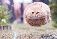 running cat, taken just at the right time so he looks like a speeding bullet cat orb Hahahaha