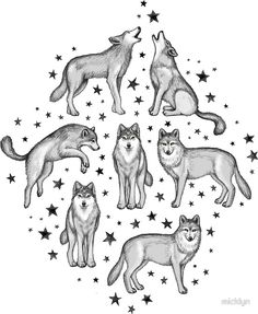 Wolves and Stars on White