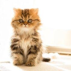 Make You Fall | Cutest Paw