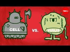 From TED Ed and Shannon Stiles, Cell vs. virus: A battle for health: All living things are made of cells. In the human body, these highly efficient units are protected by layer upon layer of Biology Teacher, Science Biology, Science Lessons, Science Education, Life Science, Biology Classroom, Science Quotes, Ap Biology, Science Ideas