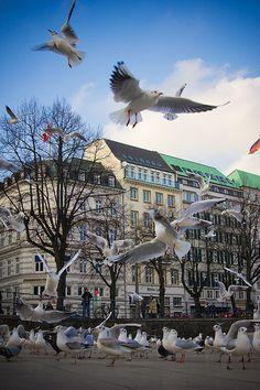 the birds - Raubtierfütterung am Jungfernstieg