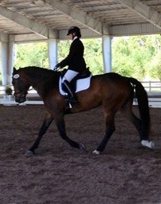 Calm, not spooky, dressage horse that is a quiet, steady, confidence builder. Show successfully in Wellington, FL with scores in the 60's. Calm at competitions and loves to work. Big boy with smooth trot and ground covering canter. $19,000