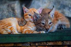"""Emergency Kittens on Twitter: """"https://t.co/7AN12y0FpH"""""""