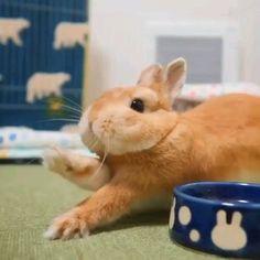 "One usual bunny day☺️🐰❤️😍 - que adorableeeeeee "" que adorableeeeeee The Effective Pictures We Offer You About trends men A - Cute Wild Animals, Baby Animals Super Cute, Cute Baby Bunnies, Cute Little Animals, Cute Funny Animals, Funny Bunnies, Cute Bunny Pictures, Baby Animals Pictures, Cute Animal Pictures"