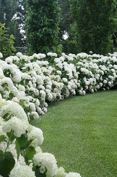 Land Wallpapers ☘︎ Hedges Landscaping, Hydrangea Landscaping, Front Yard Landscaping, Landscaping Ideas, Flower Landscape, Landscape Design, Garden Design, House Landscape, Fence Design